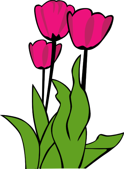 404x549 Tulip Flower Clipart 4 404x549 Clipart Panda