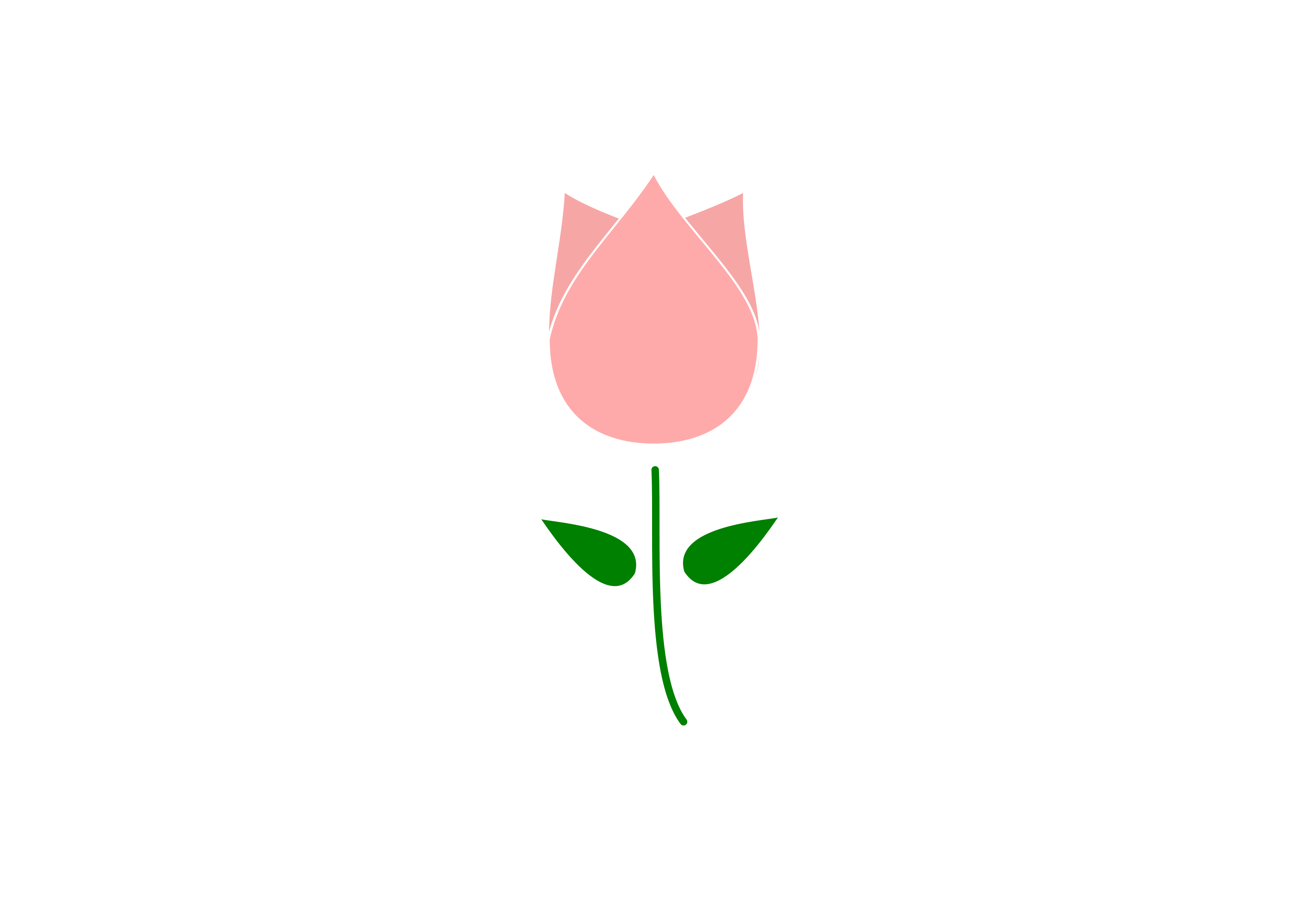 3394x2400 Clipart Tulip Flower