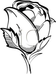 227x300 Black And White Rose Clip Art Image