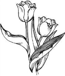 209x244 Top 57 Tulip Clip Art