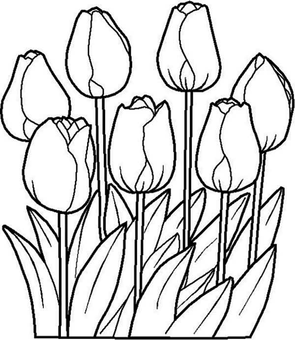 Tulip Clipart Black And White | Free download on ClipArtMag