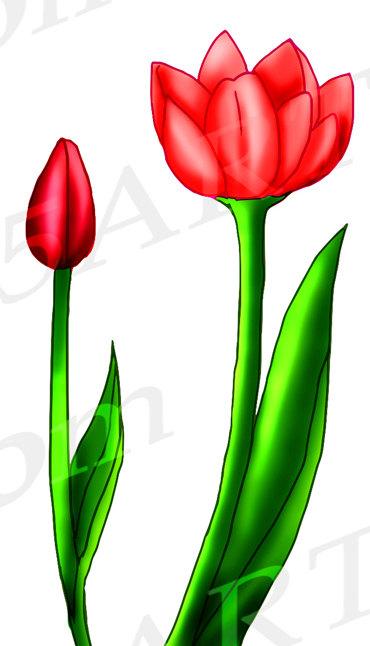370x646 50% Off Tulip Clipart, Tulip Clip Art, Tulips, Scrapbooking