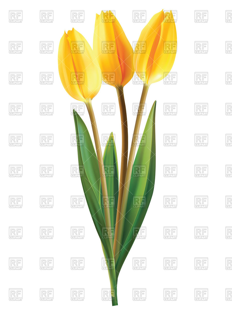 900x1200 Yellow Tulip Flowers Royalty Free Vector Clip Art Image