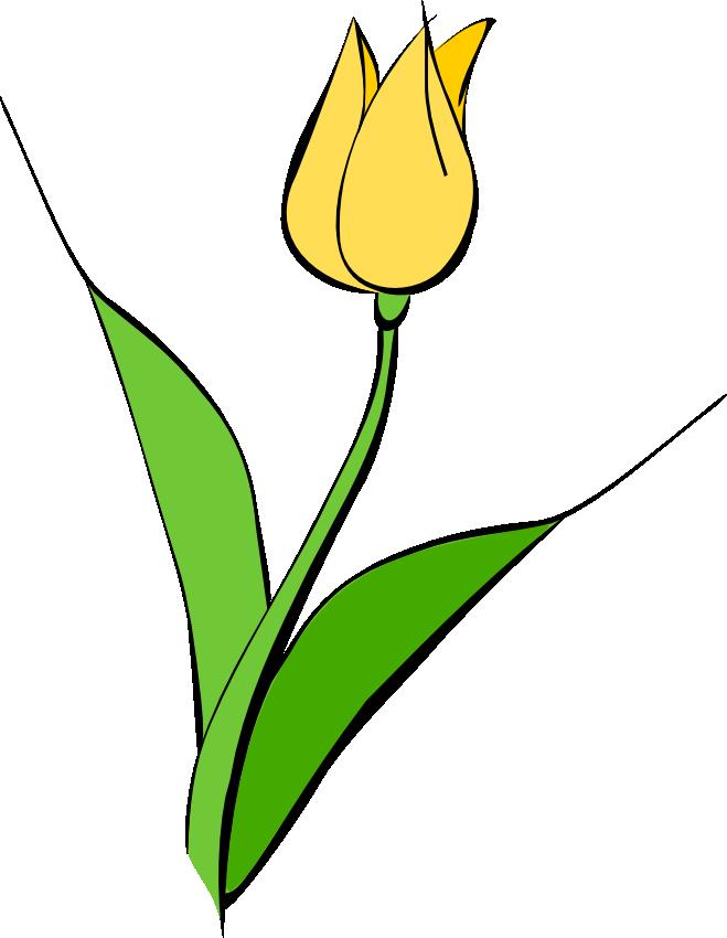 659x850 Graphics For Yellow Tulip Graphics