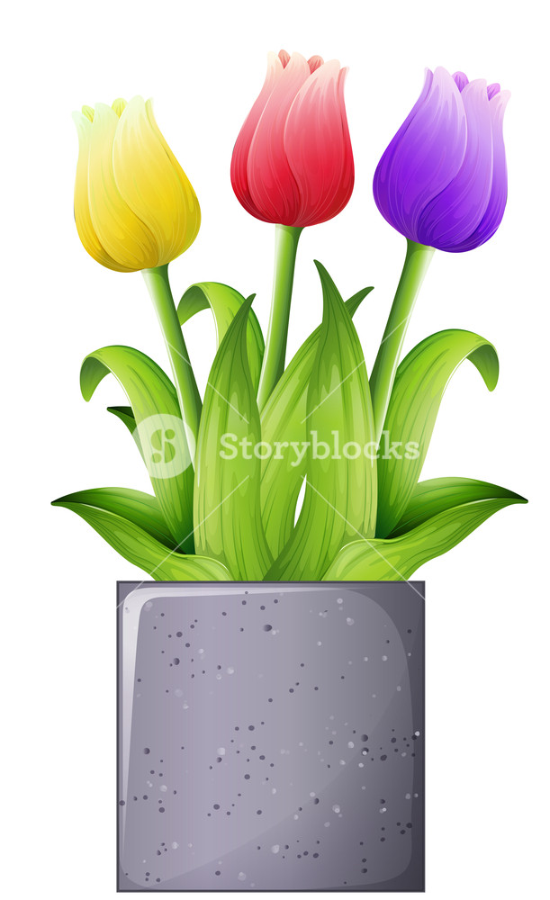 611x1000 Illustration Of A Tulip Plant On A White Background Royalty Free
