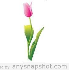 226x228 Tulip Graphic Free