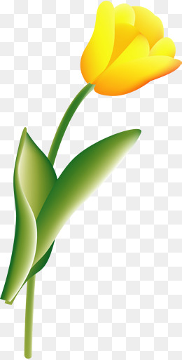 260x513 Tulip Vectors, 403 Graphic Resources For Free Download Page 4