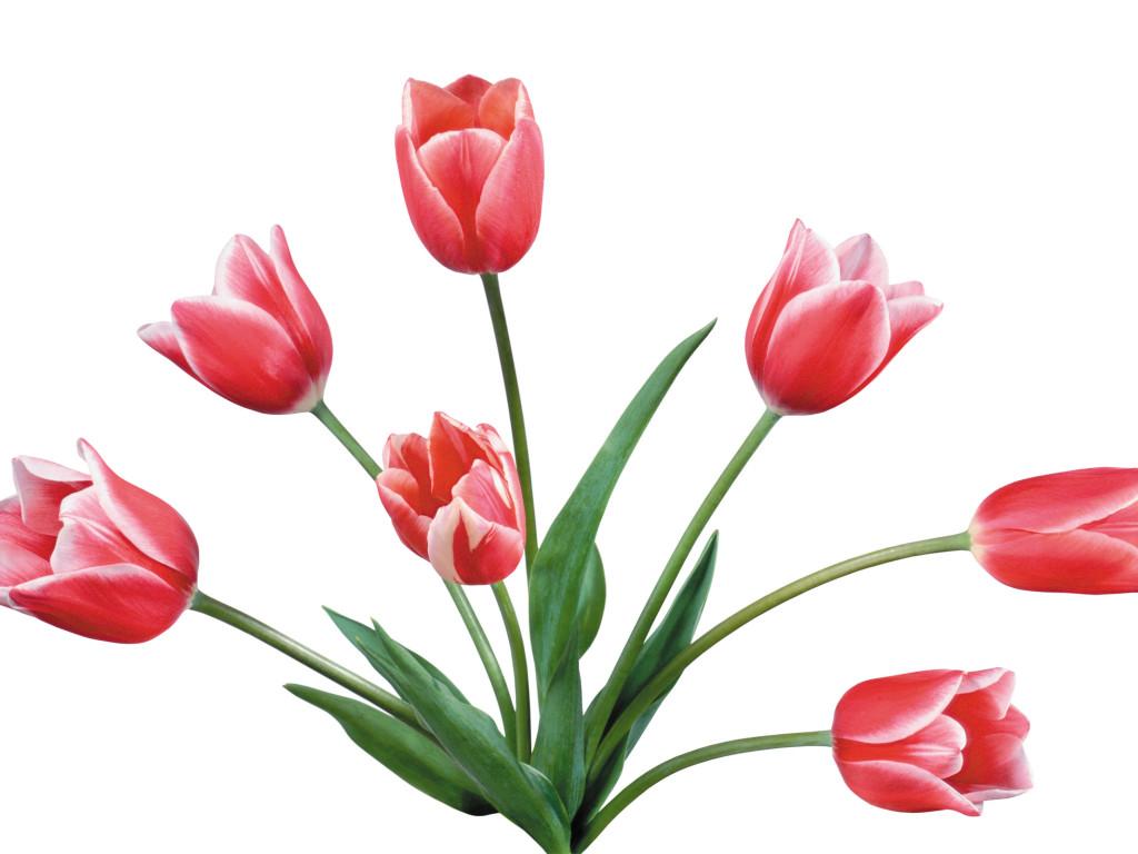 1024x768 Tulip Clipart Tulip Bouquet