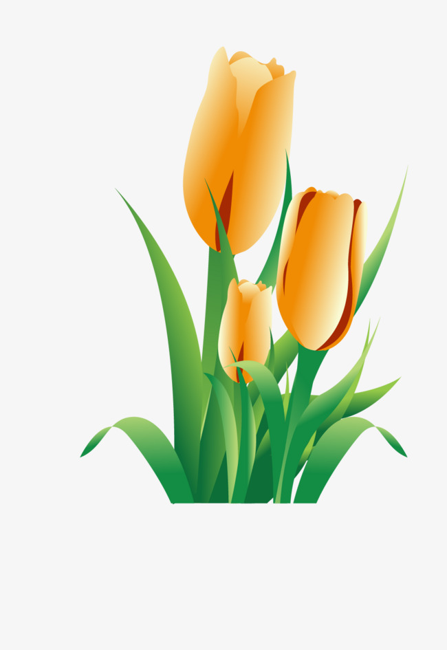 650x945 Golden Tulip, Flowers, Cartoon, Tulip Png And Vector For Free Download