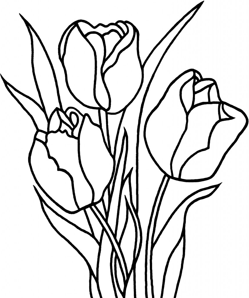 857x1024 Download Coloring Pages. Tulip Coloring Pages Tulip Coloring