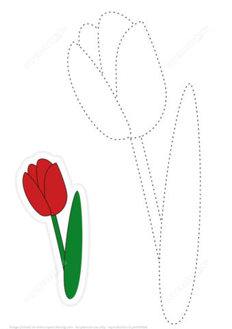 339x480 Draw A Tulip By Tracing Dashed Line And Color Free Printable