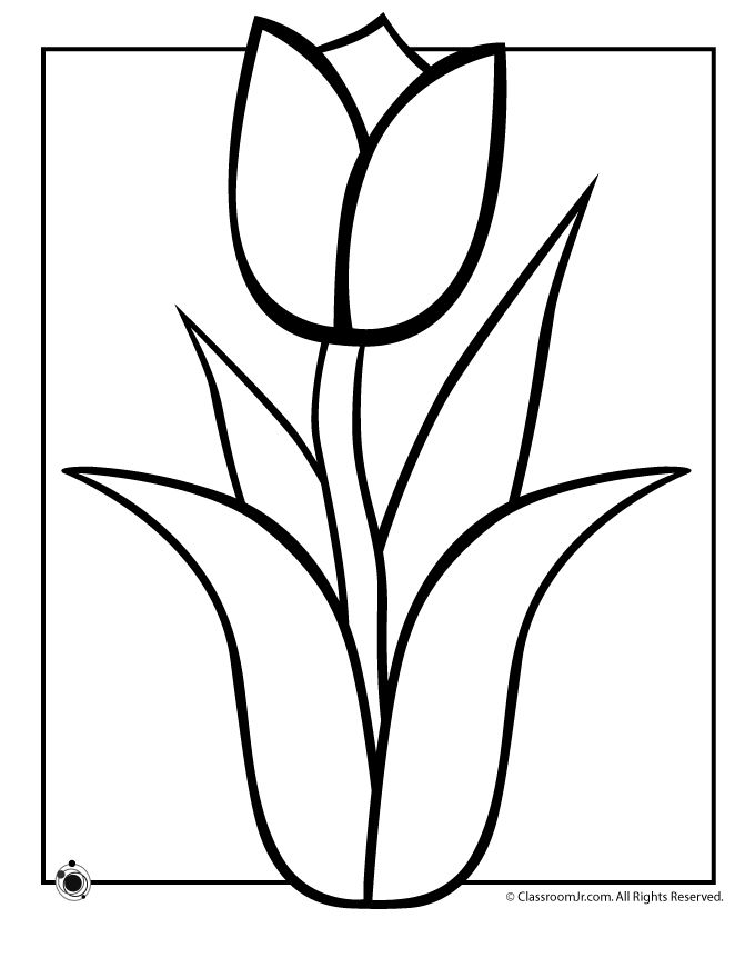 680x880 Drawn Tulip Spring Flower