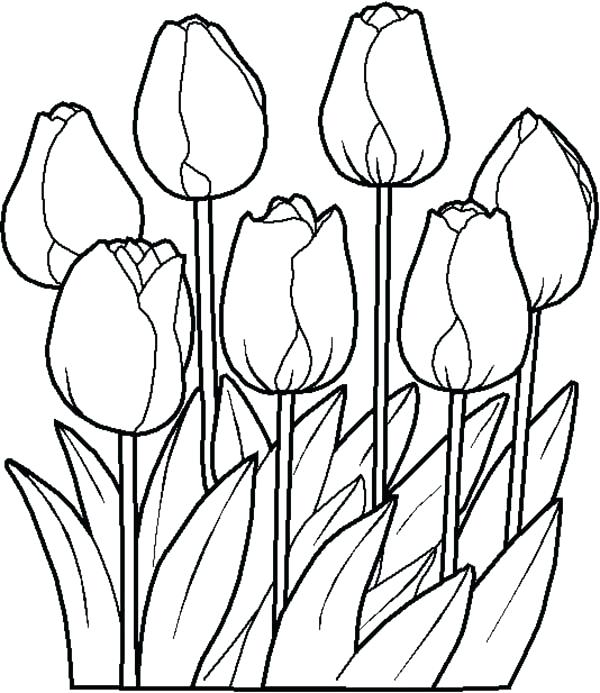 600x693 Spring Coloring Pages Tulip Page Classroom Unique Ideas On Flower
