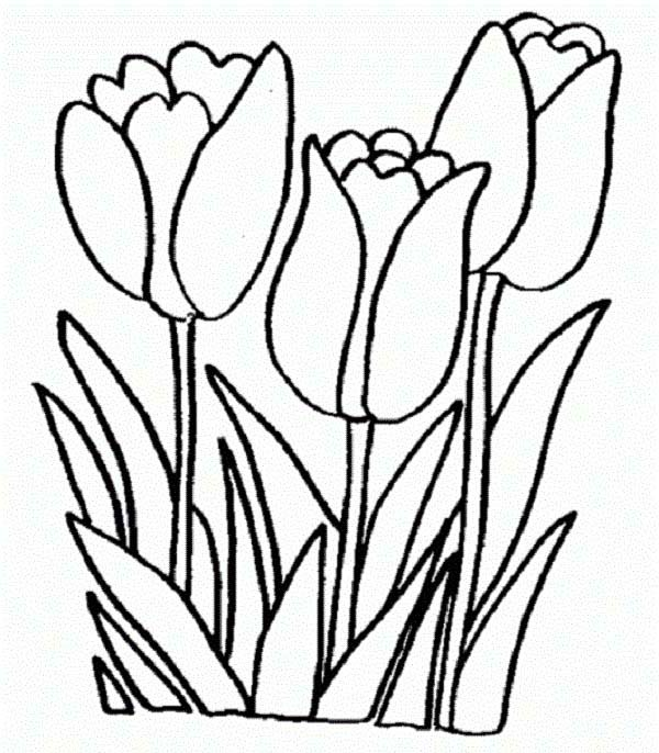 600x686 A Single Standard Tulip In Lineart Colouring Page A Single