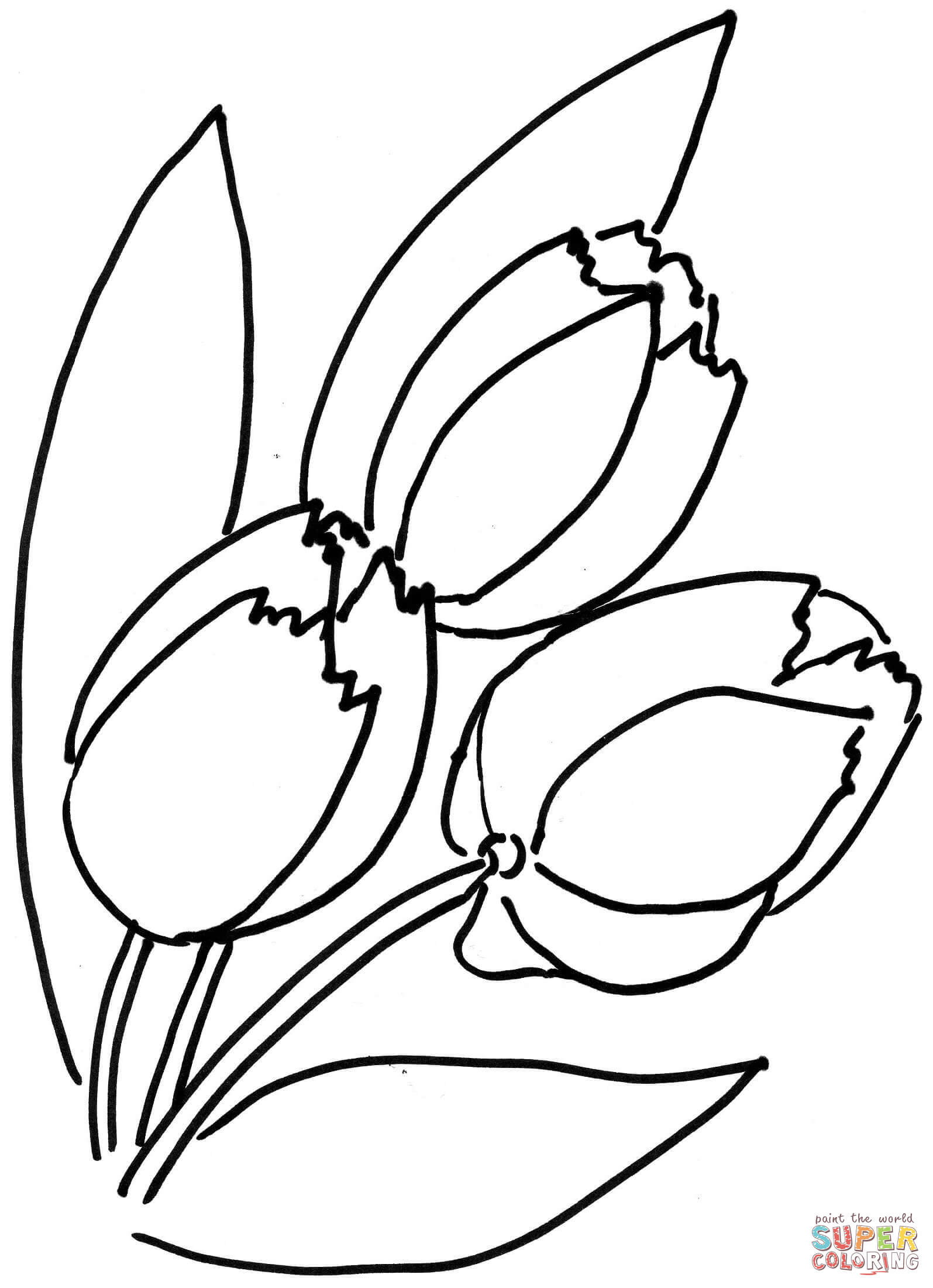 1595x2201 Tulips Flower Coloring Page Free Printable Coloring Pages
