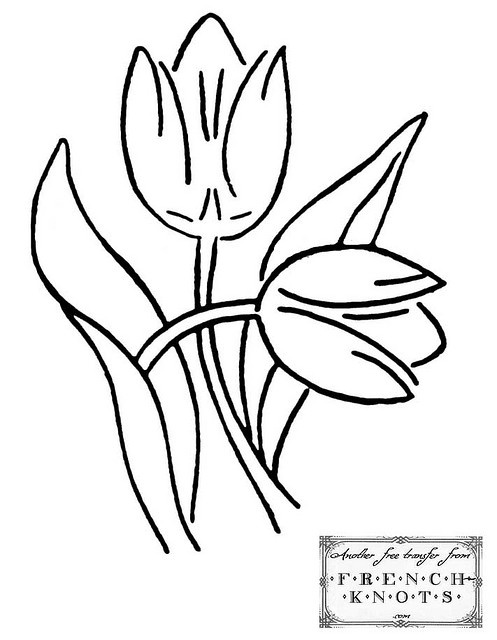 497x640 Best Tulip Drawing Ideas Flower Sketches