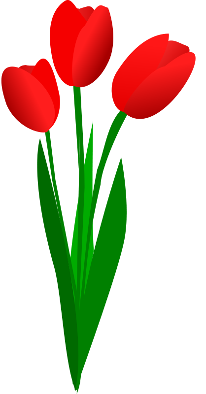418x800 Free To Use Amp Public Domain Tulip Clip Art