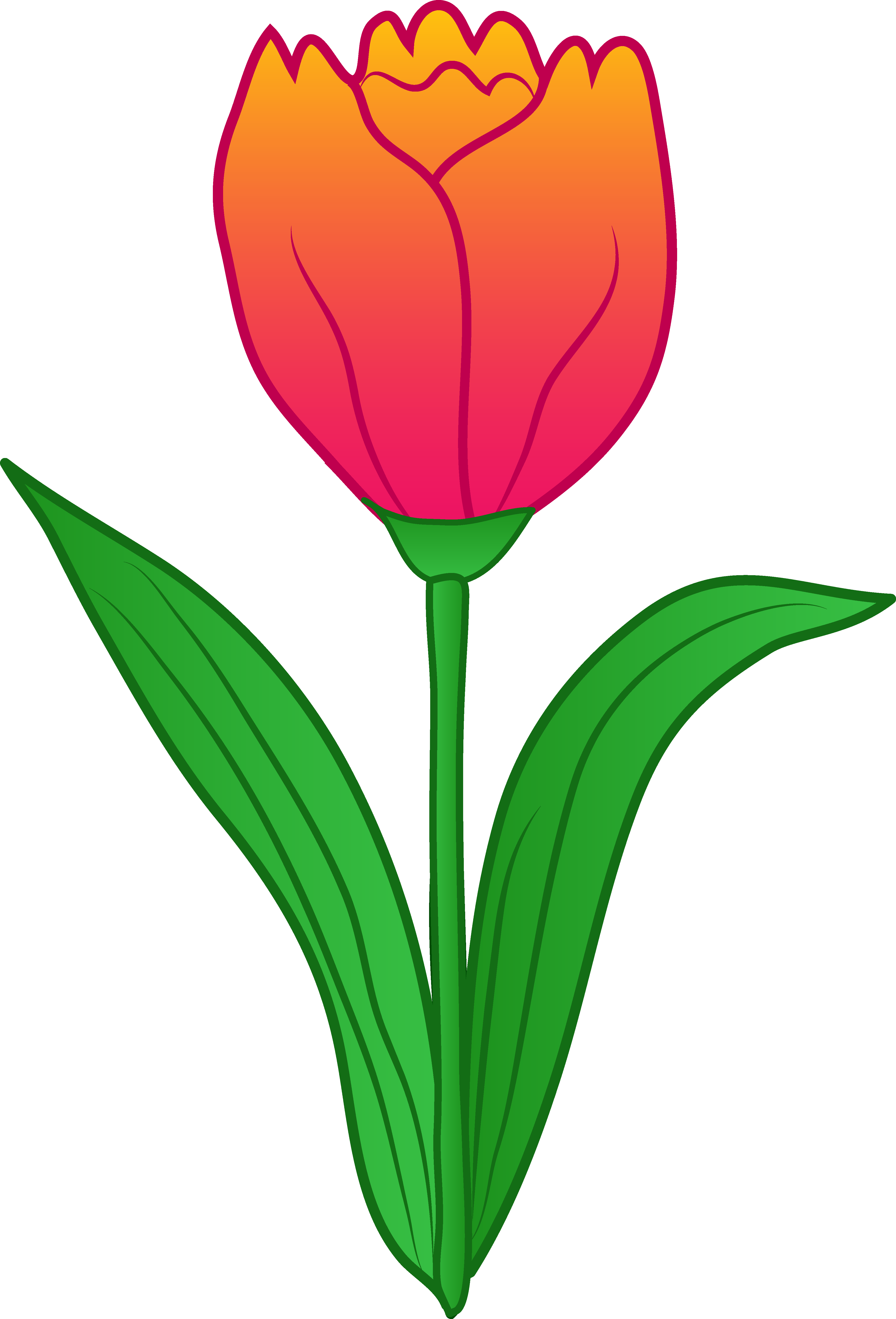 4024x5921 Pretty Pink Tulip Flower