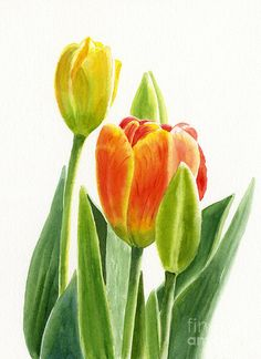 236x324 Tulips Drawing
