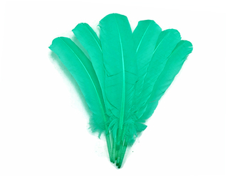 Turkey Feather Picture