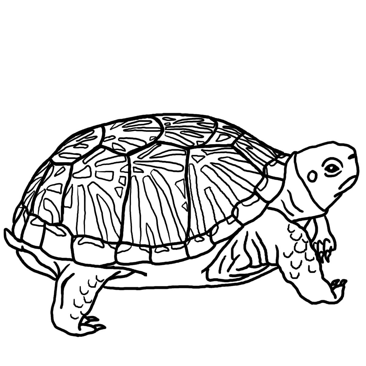 1200x1200 Free Turtle Clipart Black And White Image