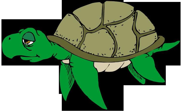 750x461 Turtle Clipart Png Transparent