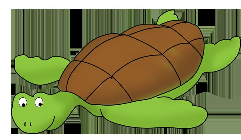 787x456 Sea turtle top turtle clip art free clipart image