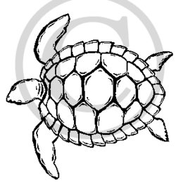 250x263 Hawaiian Sea Turtle Clipart Clipart Panda