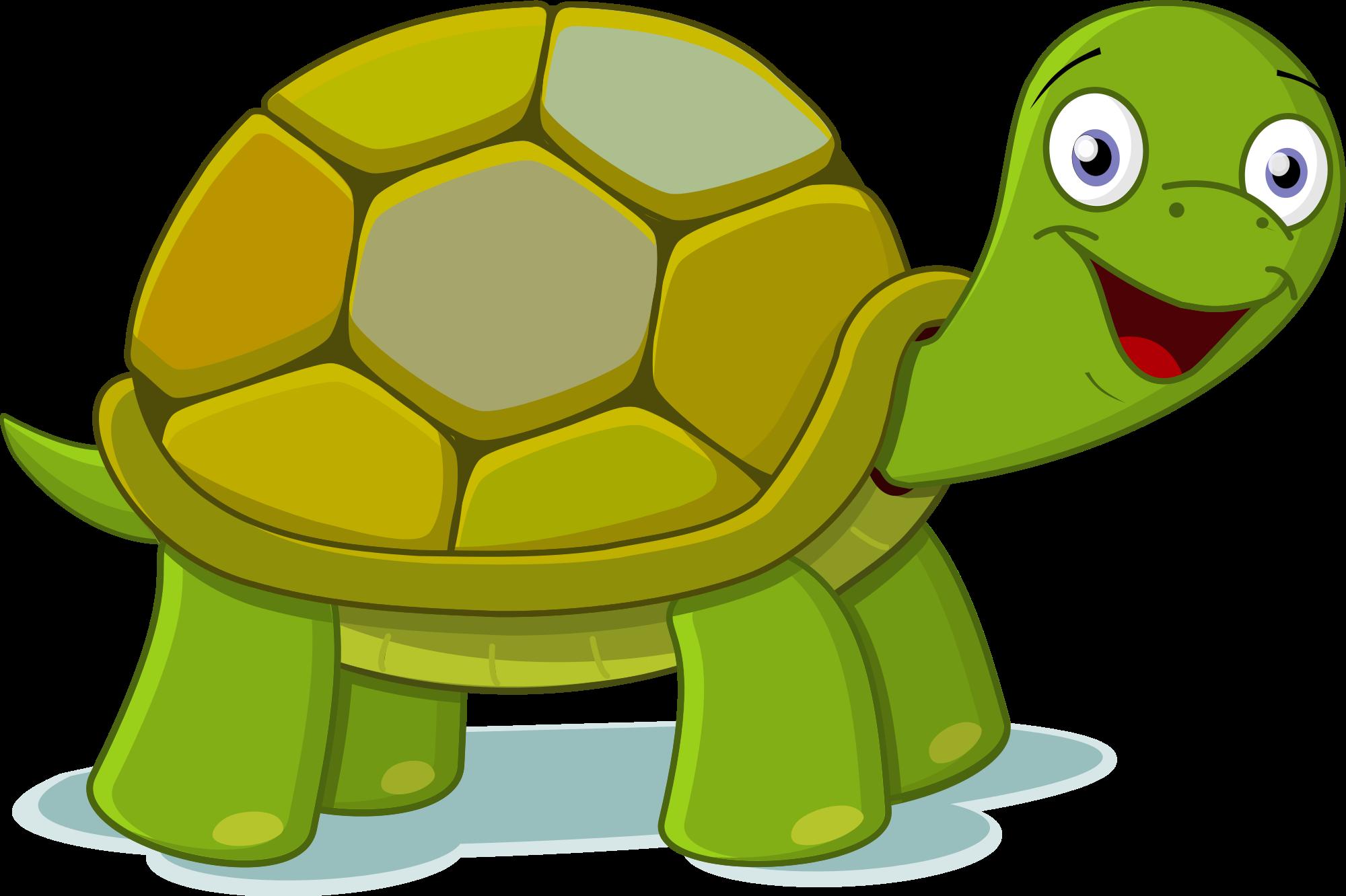 2000x1332 Turtle Clip Art
