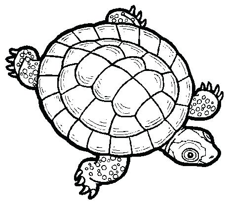 Turtle Clipart Black And White | Free download on ClipArtMag