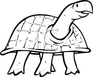 300x250 Best Turtle Clipart Black And White