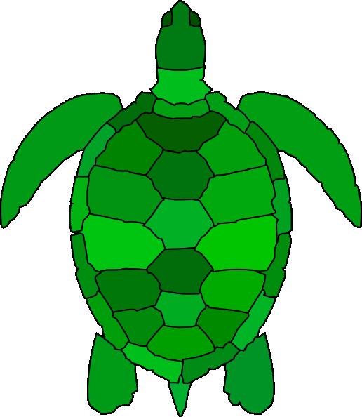 516x594 Cartoon Sea Turtle Clipart
