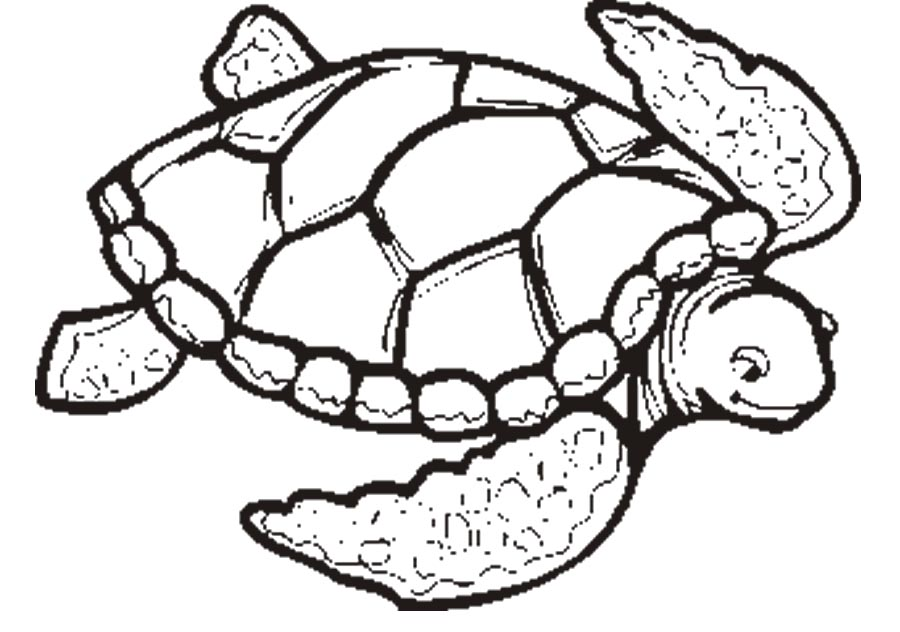 900x632 Brilliant Design Turtle Coloring Pages Cute Sea Free Printable