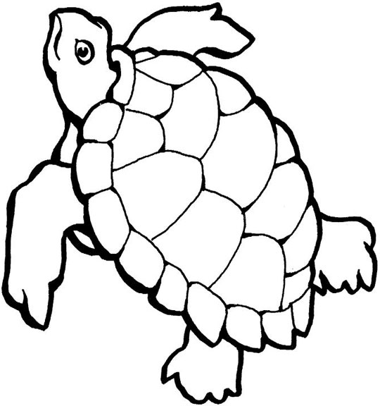 540x576 Drawn Turtle Coloring Page