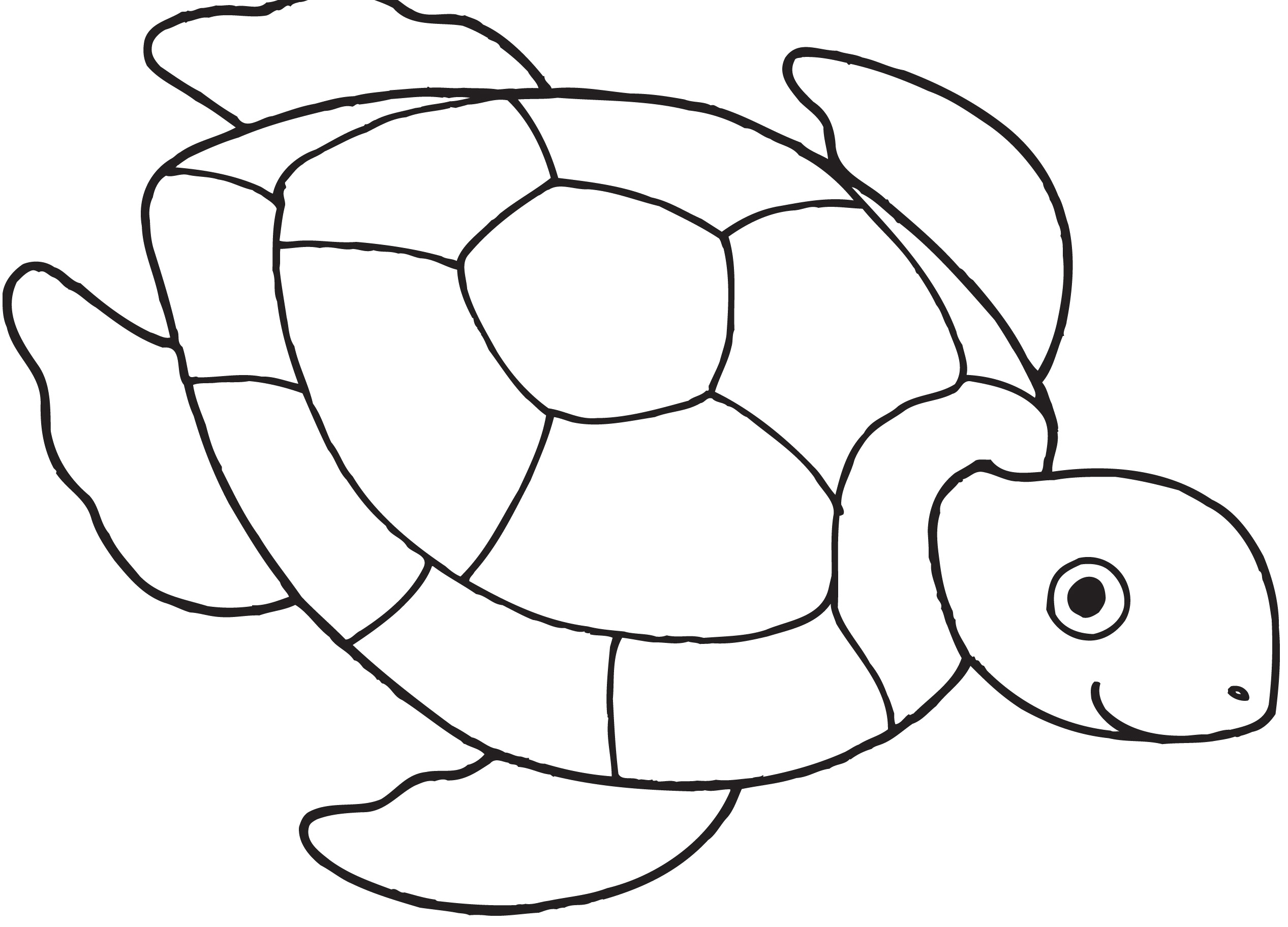 This is an image of Irresistible Printable Turtle Coloring Pages