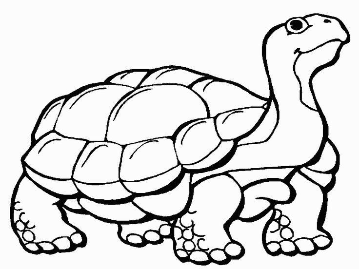 736x552 37 Best Turtle Coloring Pages Images Diy, Anti