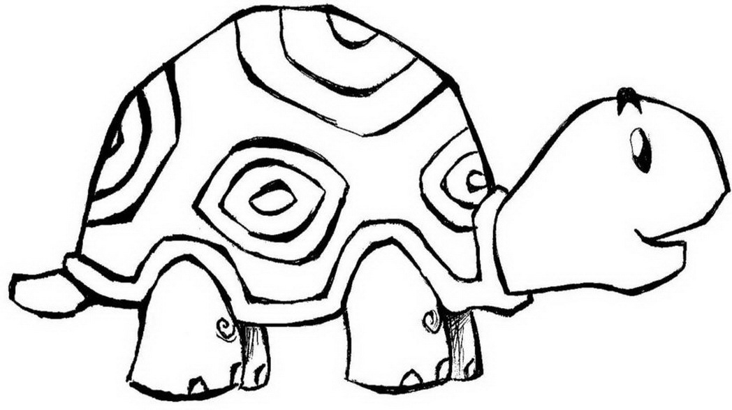 1048x587 Animal Turtle Coloring Pages Animals
