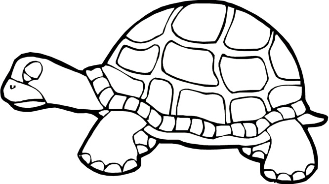 666x374 Turtle Coloring Pages