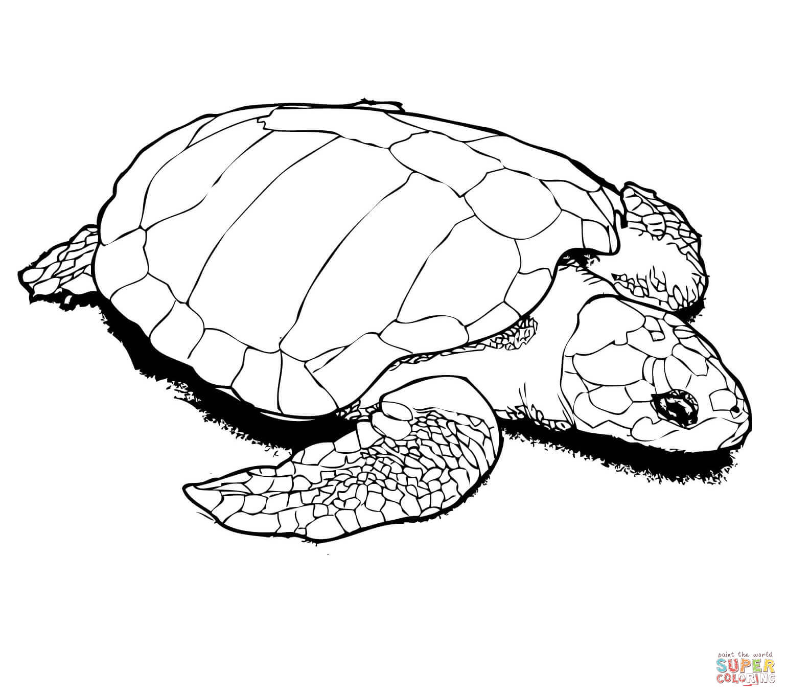 1540x1364 Turtles Coloring Pages Free Coloring Pages