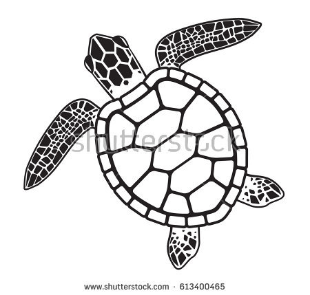 450x429 Drawn Turtle Sketch