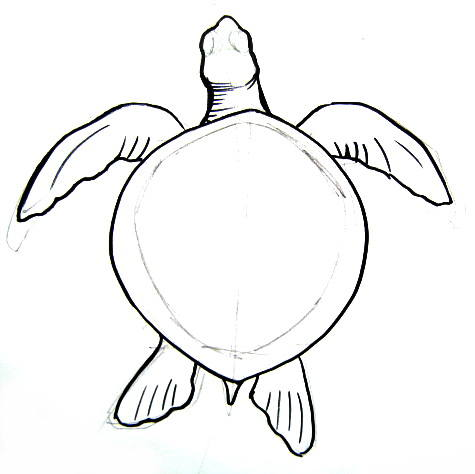 how to draw a cartoon sea turtle step by step