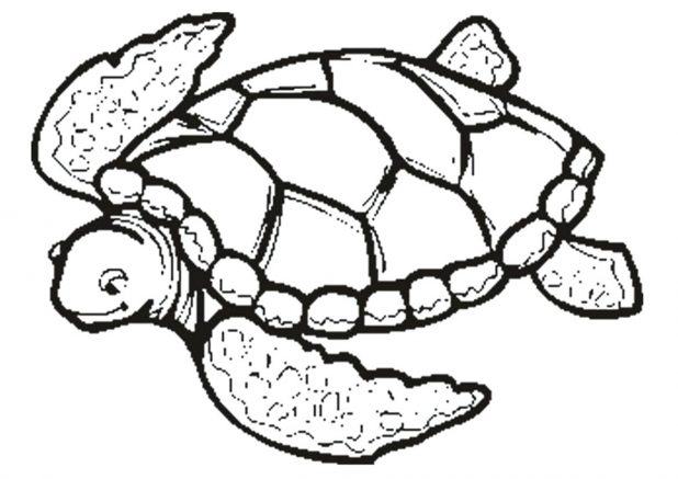 618x437 Pin Drawn Turtle Outline 8 Sea Vector Image Pictures Sea Turtle