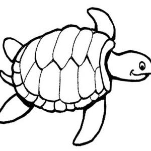 300x300 Sea Turtle Drawing Free Coloring Page Sea Turtle Drawing Free