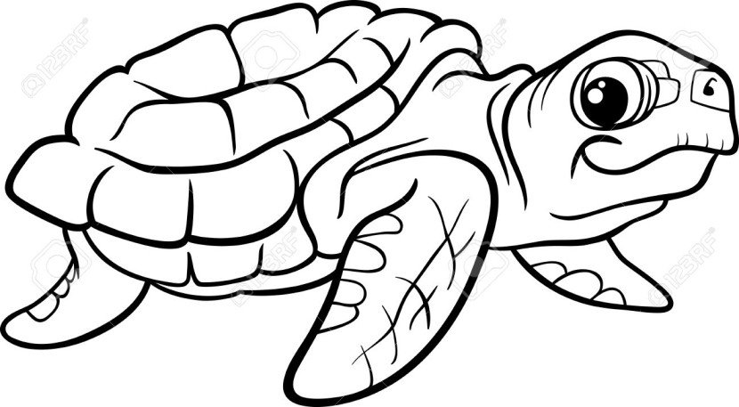 830x457 Sea Turtle Clipart Line Drawing