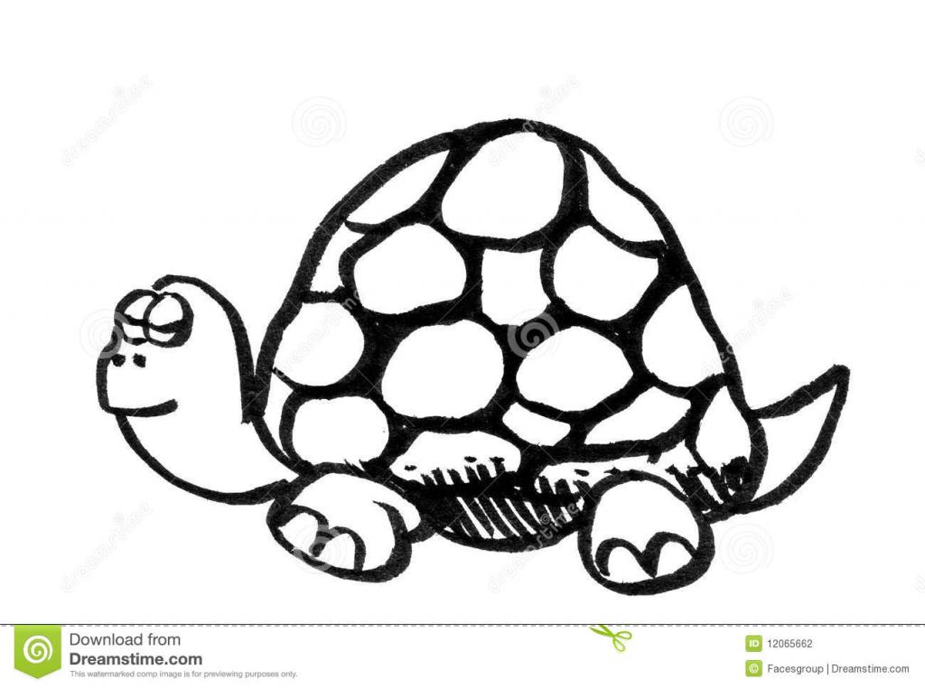 1024x762 Cartoon Turtle Drawings Turtles