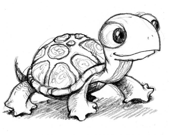 671x533 Coloring Pages Cartoon Turtle Drawing How To Draw Step8 Source