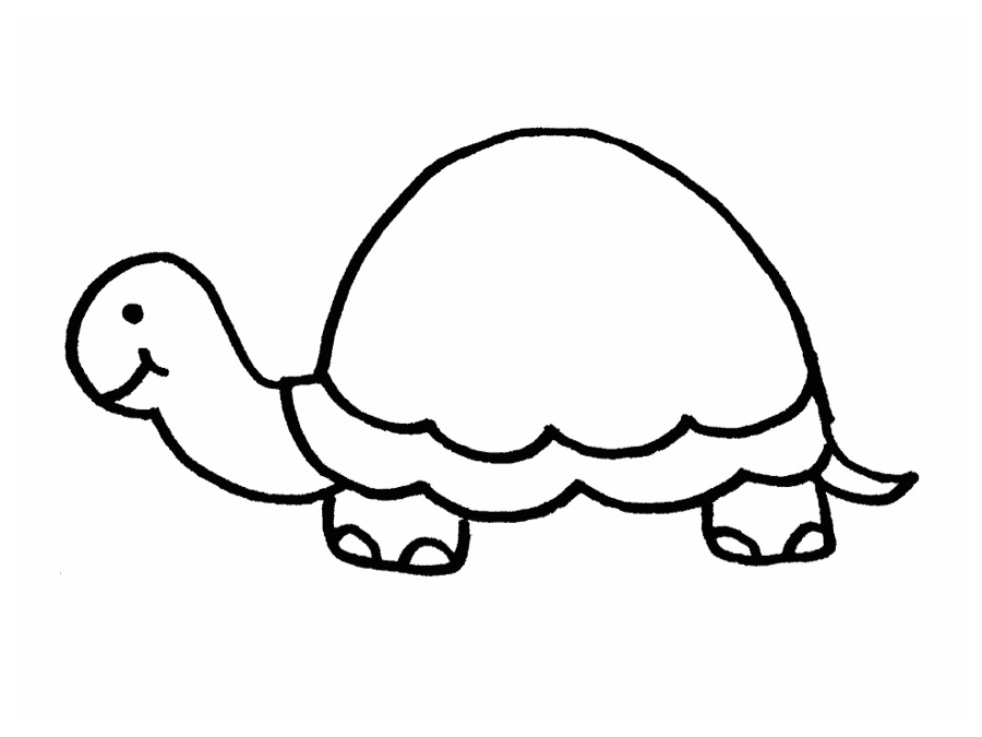 900x675 Free Outline Of Turtle On Concept Animal Coloring
