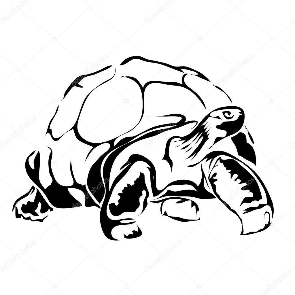 1024x1024 Outline Turtle Vector Image. Can Be Use For Logo Stock Vector