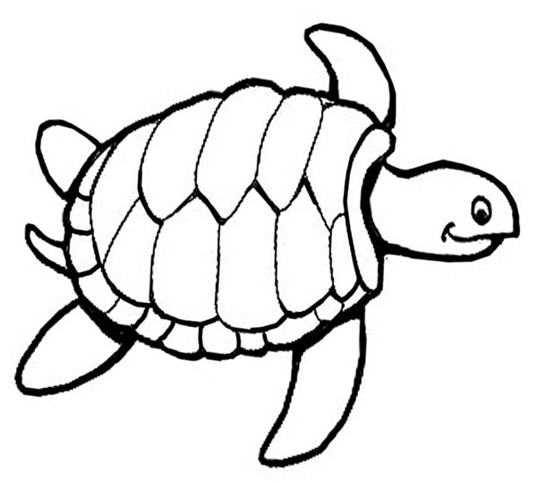 600x539 Sea Turtle Outline Coloring Pages