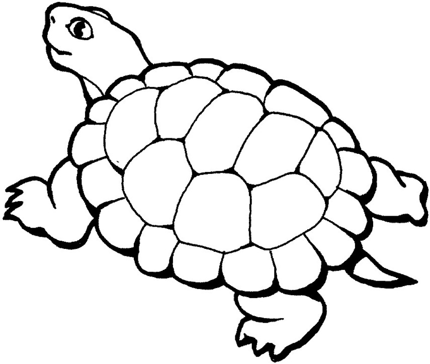 855x724 Turtle Clipart Black And White
